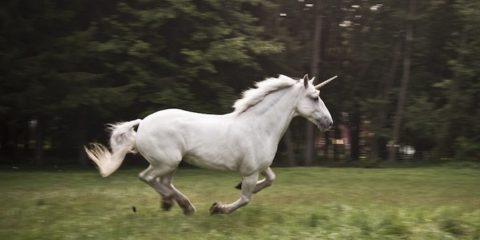 Unicorn - The National Animal of Scotland
