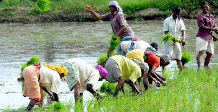 farmers day in ghana