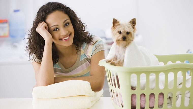 A girl folds towels next to a Yorkie who sits in a laundry basket.