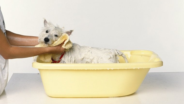 A dog being dried with a towel