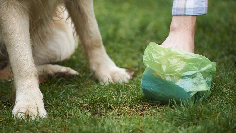 Responsible care of pet