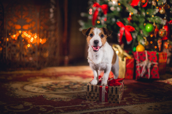 dog-christmas-tree