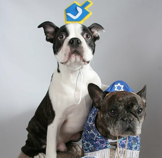 20 Adorable Chanukkah Dogs Of Instagram
