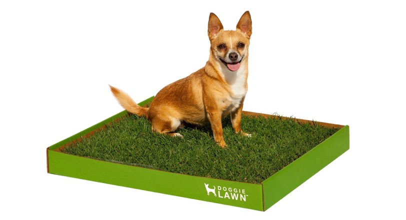 doggie-lawn-christmas-gift-dog