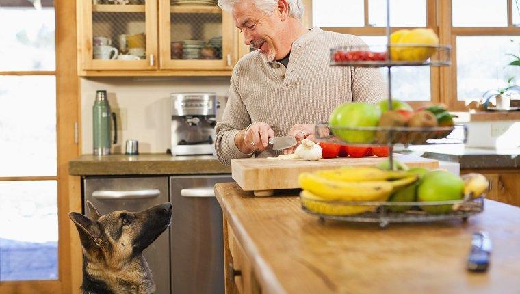 Hispanic man with begging dog in kitchen