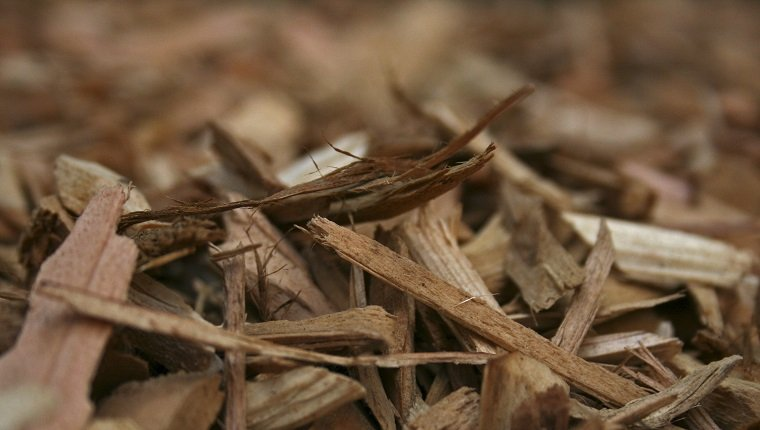 Macro Shot of new cedar wood chips.
