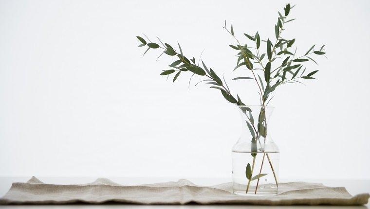 Studio Shot of eucalyptus twig in glass vase