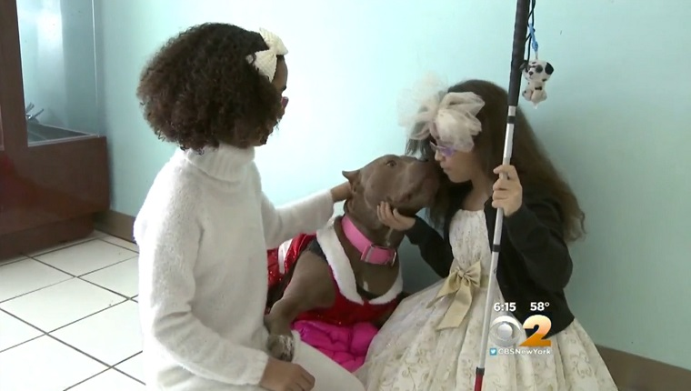 The two girls kneel to pet the Pit Bull who is dressed in a Santa suit and licking one of the girls' faces.