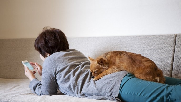 An asian woman holds a smart phone lying down on sofa. The dog, a Chihuahua, sleeps on her back.