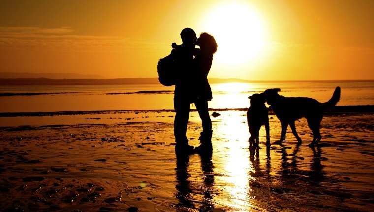 kissing couple silhouette with dogs at the beach