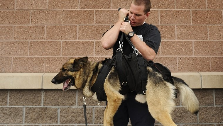 K9TRAINING28-- Todd Moody, of Boulder County, with his dog Rocky test out his dog's harness outside West Metro Fire Station #7 in Lakewood. Members of the Colorado Police Canine Association will host a training seminar in Lakewood, where dozens of specially trained dogs will perform rappelling exercises and work through being exposed to adverse conditions during field work. RJ Sangosti/ The Denver Post (Photo By RJ Sangosti/The Denver Post via Getty Images)