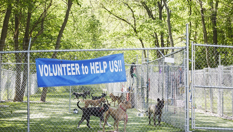 """Several dogs stand in a fenced-in outdoor area with a sign that reads """"Volunteer to help us."""""""