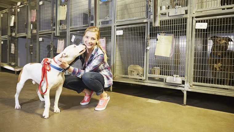 A shelter volunteer pets a Pit Bull mix while other dogs wait in kennels behind her.