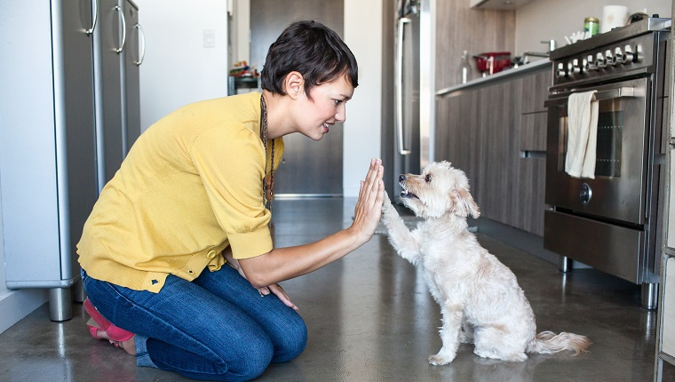 A young woman kneels down to give a small, white dog a high five in the kitchen.