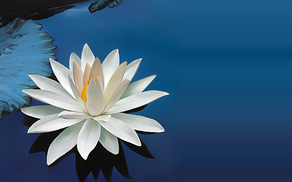National flower of India white lotus
