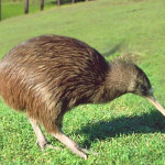 national animal of new zealand