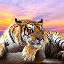 tiger the national animal of india