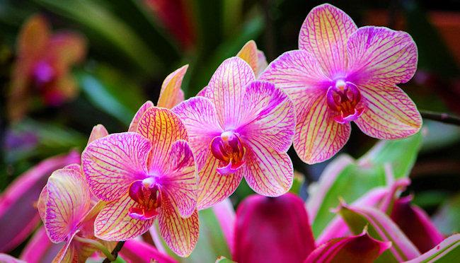 National Flower of Kenya