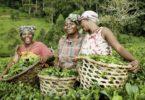 International farmers day