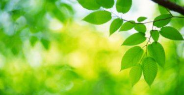 Tu B'Shevat (Arbor Day) in Australia