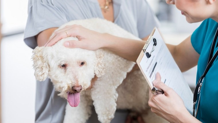 An adorable small white dog is held by her unrecognizable owner as she answers intake questions by an unrecognizable vet tech. The vet tech holds a clipboard. She strokes the dog and speaks to her to put her at ease.