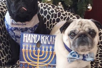20 Adorable Chanukkah Dogs Of Instagram