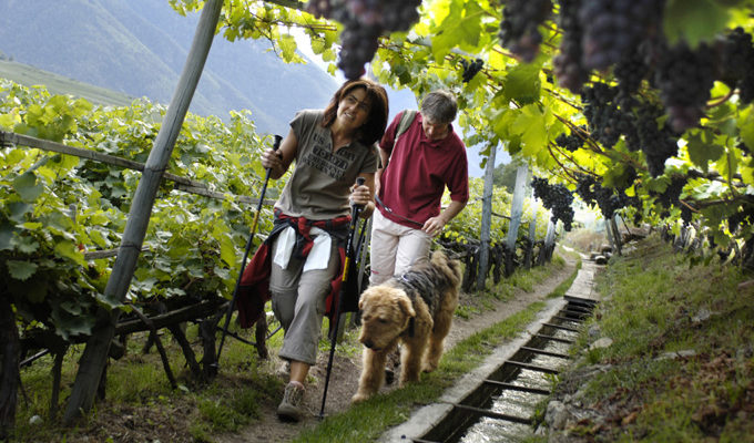 Do you have a grape vine in your yard? Grapes are toxic to dogs. (Picture Credit: Getty Images)