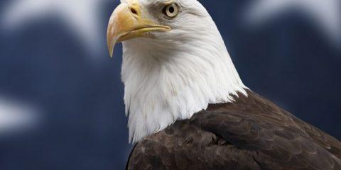 national bird of usa