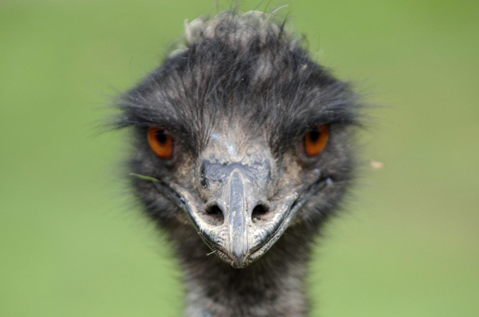 Australia of EMU